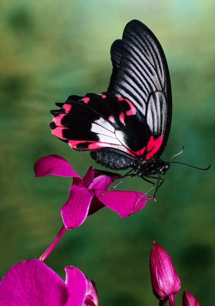 21 best images about Butterfly & Flower photography on ...