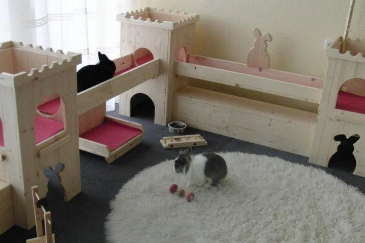 A wonderful example of an indoor play area. This is way better than a tiny hutch! A hutch is not enough.