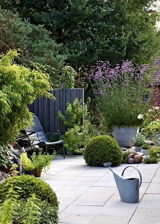 An inviting corner. Verbena bonariensis in large pot.