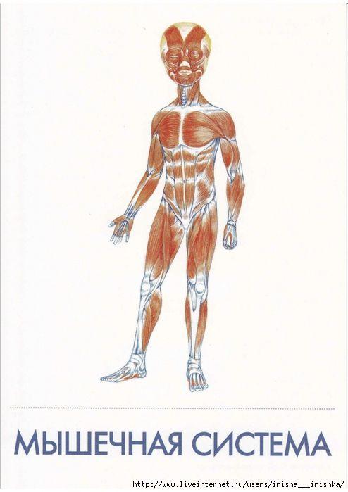 Медосмотр девушки изучаем анатомию в натуре фото 627-966