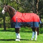It should be very important that your horse is comfortable while rugging it. Horses rugs will give you the best rugs which are ideal and perfect your horse.
