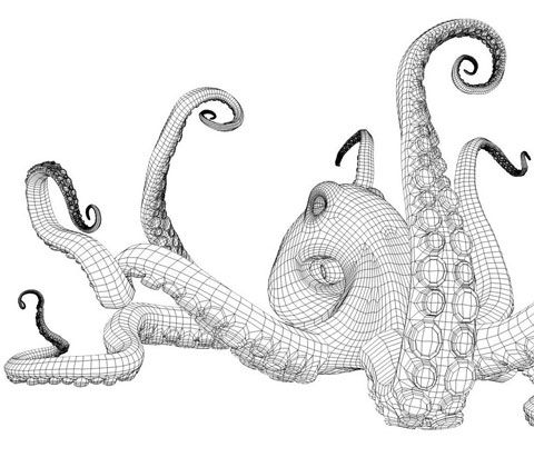 Realistic Octopus Drawing | Early sketch for 'Octopus', Bernardo Barbi