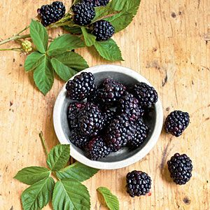 Pick big, luscious blackberries right in your own backyard with our easy tips for growing blackberries. | SouthernLiving.com