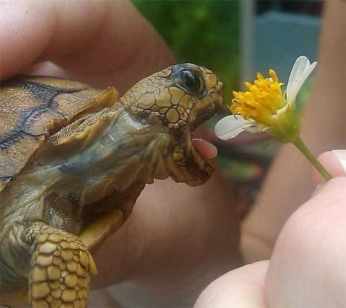 Hungry baby tortoise super cute.. but watch those fingers..