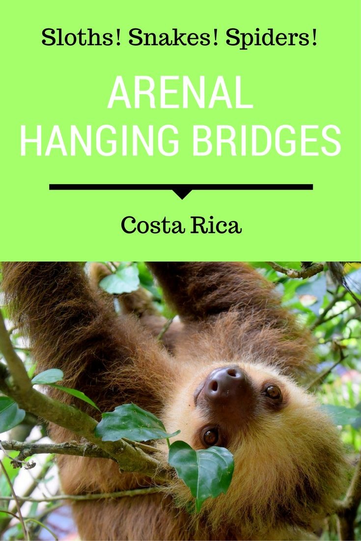 Costa Rica's amazing variety of wildlife, birds and insects are the reason many people visit Costa Rica. You'll spot some of the most interesting critters and creatures at Mistico's Arenal Hanging Bridges Park.