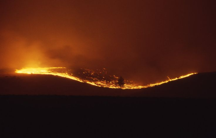 1988 Yellowstone fires
