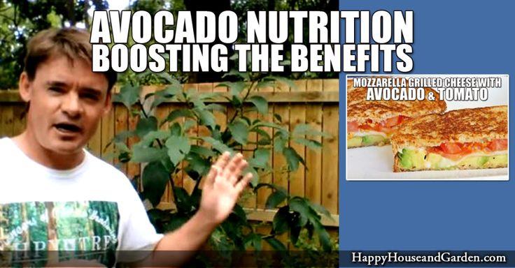 Avocado Nutrition Boosting the Benefits