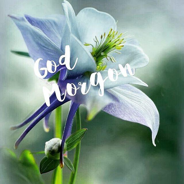 God morgon☀😃☕ Ny vecka o Metojectdag är det ju... Tjejträff kl 18 ikväll🍃Bella uppe i varv🐕Ha en bra början av veckan😃💛 #nyvecka #metojectdag #bella