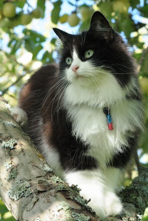 Beautiful cat watching from the trees.