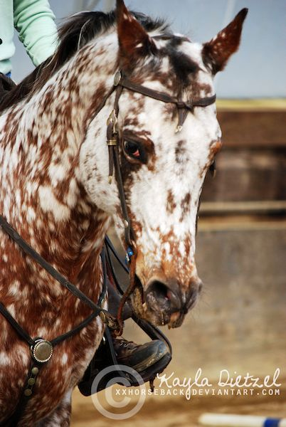 1000 images about appaloosa horse on pinterest coloring