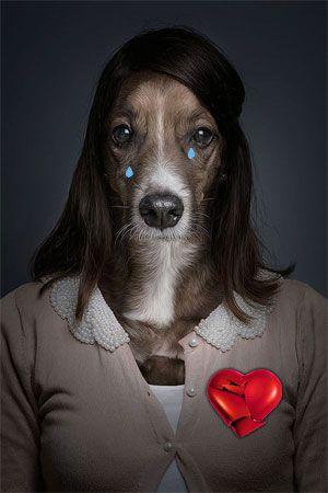 Разбитое сердце у собаки как результат предательства человека.