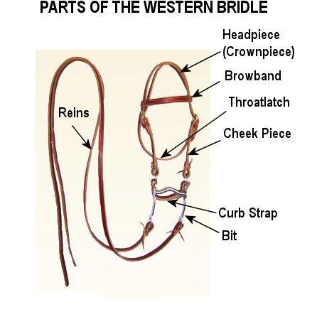 Western Horse Tack Diagram | Horseback Riding For Beginners |