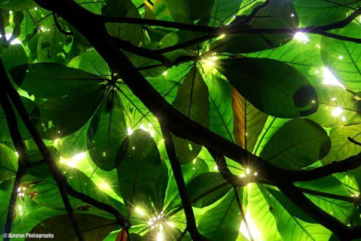 Shades of green - Ajaytao