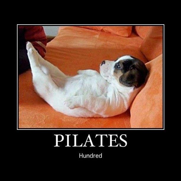 Картинки пилатес смешные, смешные толстые коты