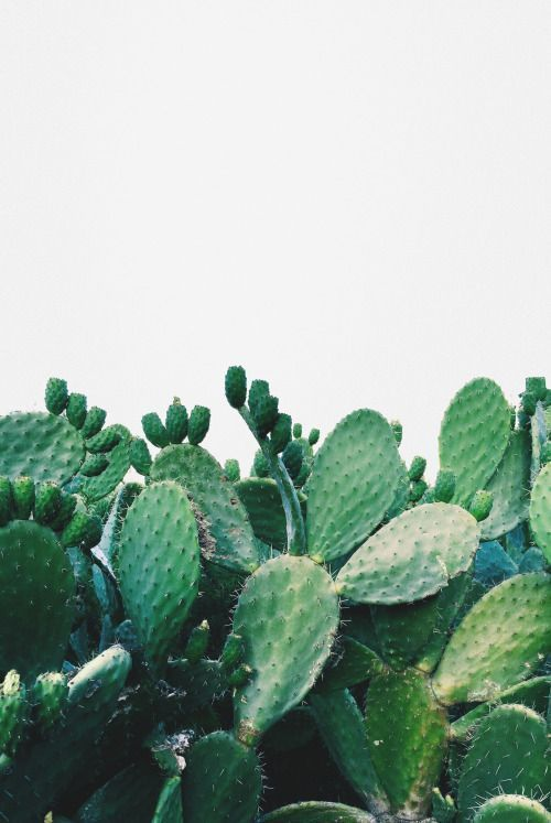 Cactus Picture For Amazing Greenery Inspiration. Add House Plants To Make  Your House Feel More Like A Home   If You Donu0027t Have A Green Thumb, Go For  Hard To ...