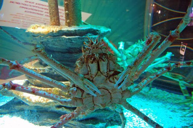 Jemina Staalon Veden vuosi 2: Meduusat, jättiravut ja muu mukava vedenalainen 2011