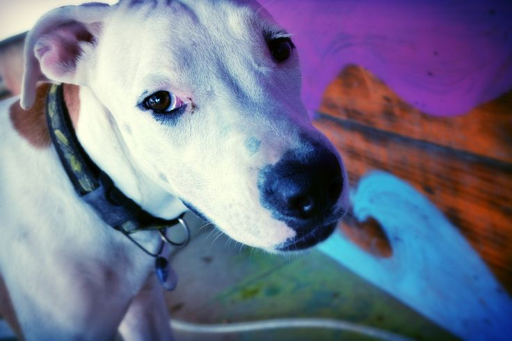 Cute dog @ Sayulita, Nayarit. Mexico