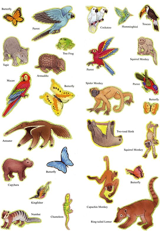 rainforest-animals