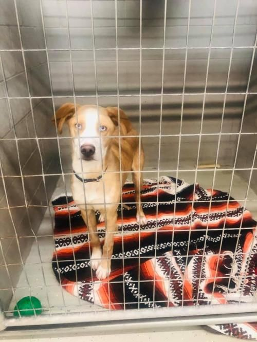 Thanks For Sharing And Helping This Dog Find A Home Catahoula
