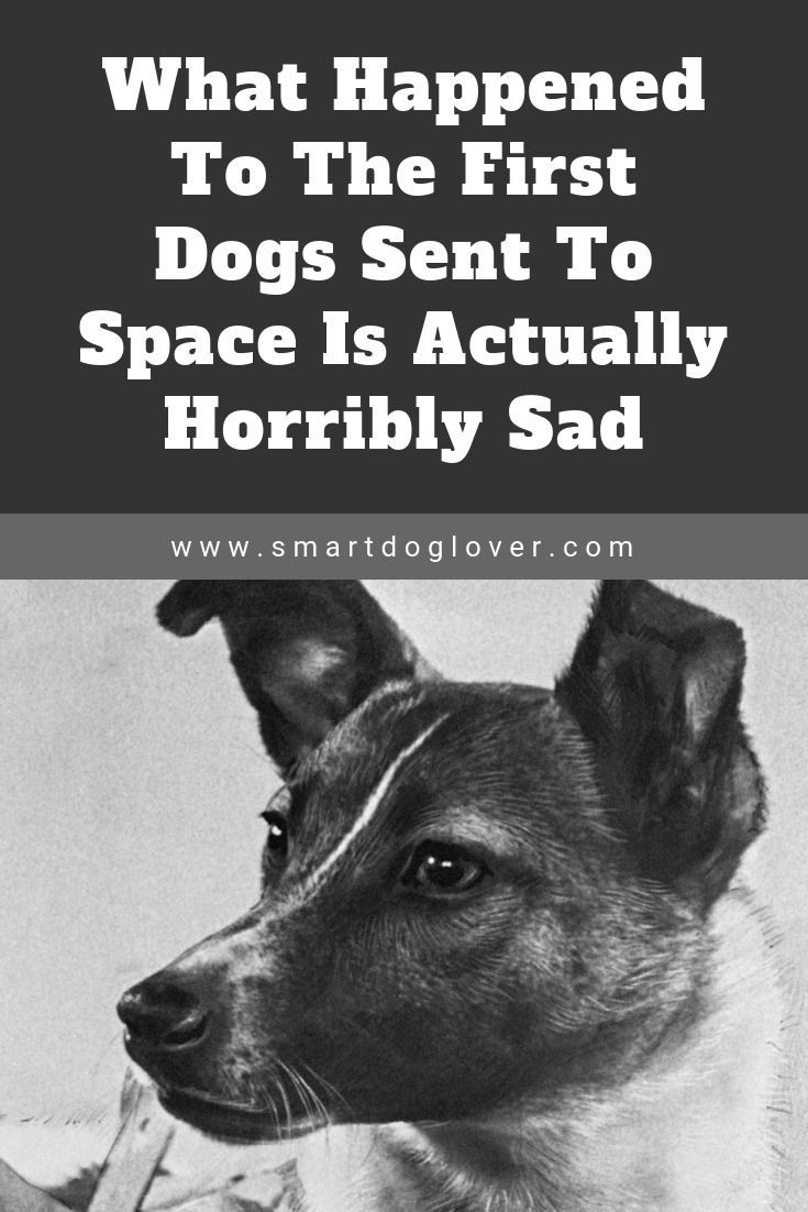 What Happened To The First Dogs Sent To Space Is Actually Horribly