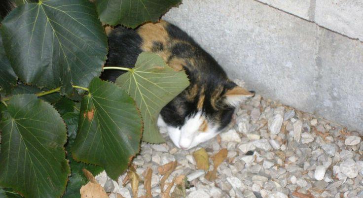 Mia dorme sotto le foglie di in ramo staccato dal tiglio