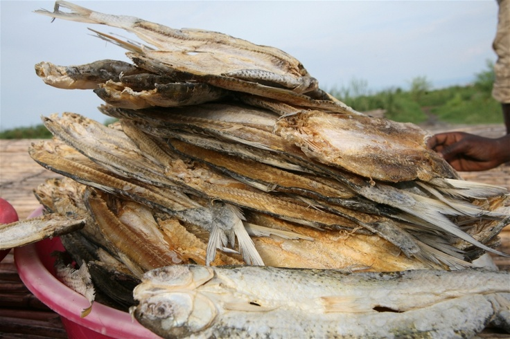 Fish is preserved by drying it in the sun in Kasenyi, DRC