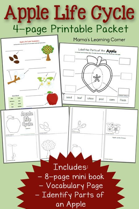 Making Applesauce Worksheets : Best images about all apples on pinterest