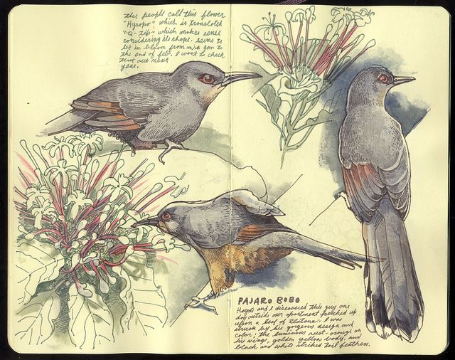 moleskine sketchbook - artist unknown?