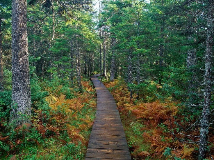 Fundy National Park on the Bay of Fundy - Alma, New Brunswick, Canada