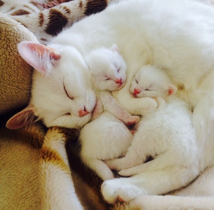 How Gorgeous Are These Kittens Cutest Newborn Kittens Cute Cats