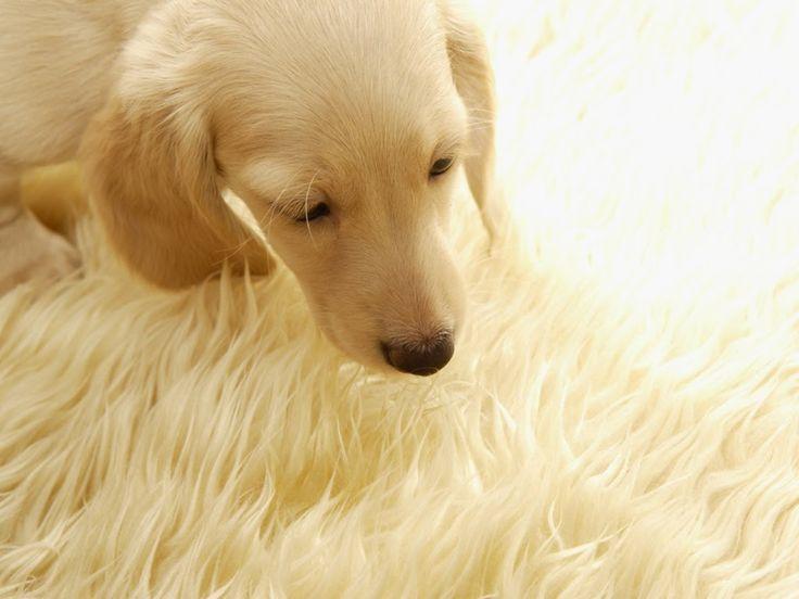 Blog da Vann: Levedo de cerveja diminiu a queda de pêlo dos animais. - alimentação saudável - animais - pets - mascotes