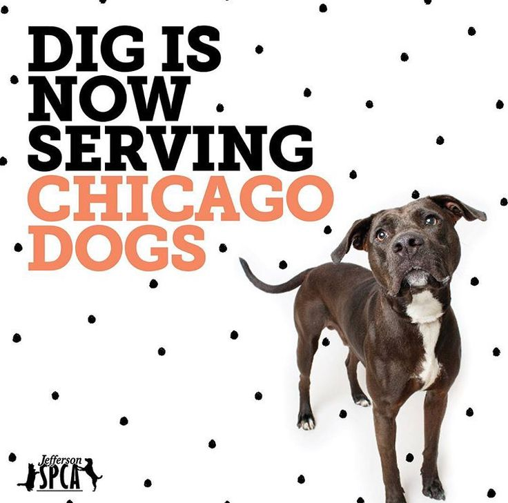 Join Dig in Chicago June 23! Free tickets! Dug the dog