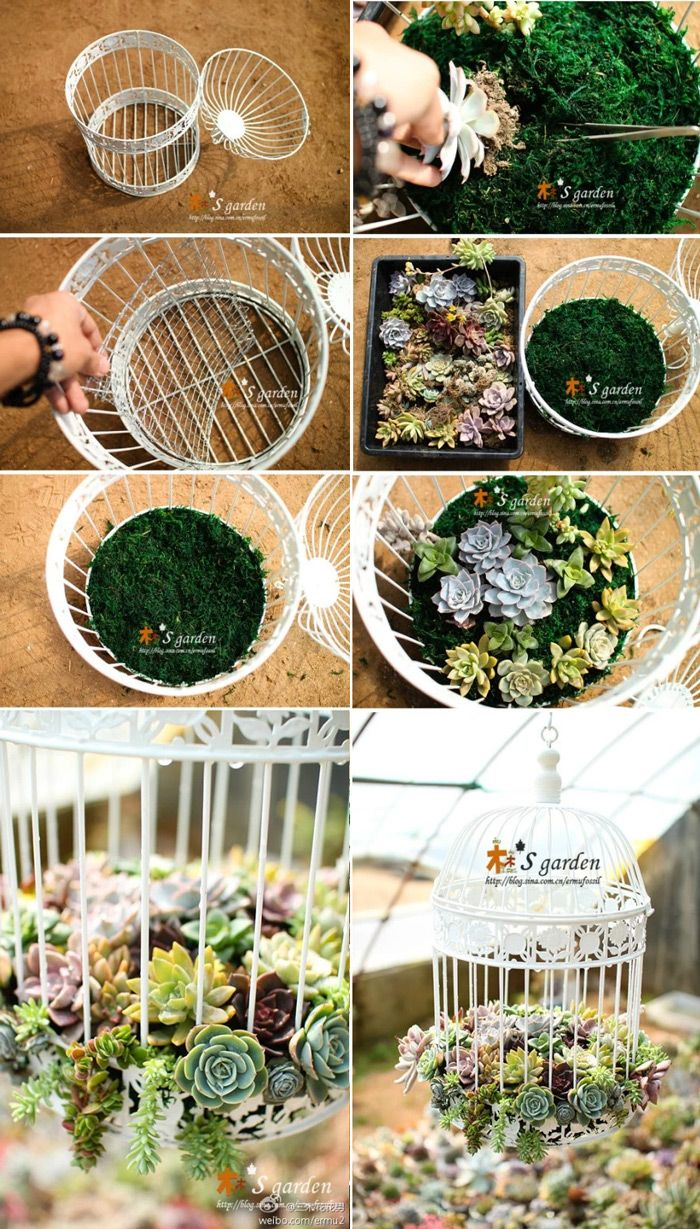 Até mesmo uma gaiola pode ser aproveitada para fazer um vaso diferente com plantas suculentas.