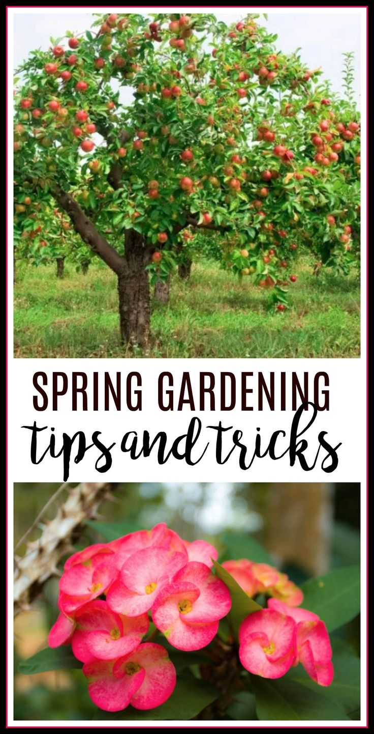 gardening tips and tricks, gardening hacks, how to garden, spring garden