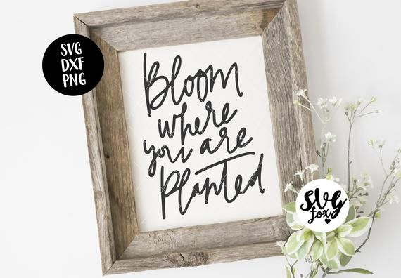 Instant Svg Dxf Png Bloom Where You Are Planted Handlettered Etsy Svg Handlettering Hand Lettered Svg