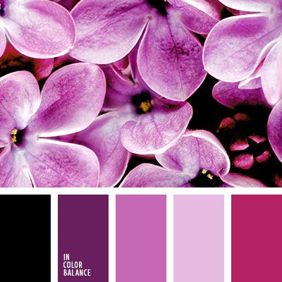 голубой, дизайнерские палитры, оттенки фиолетового, подбор цвета, почти-черный, синий, сиреневый, темно-фиолетовый, цвет гортензии, цвет сирени, цвет фиалок, цвет фиолетовых орхидей, цветовое решение для дома.