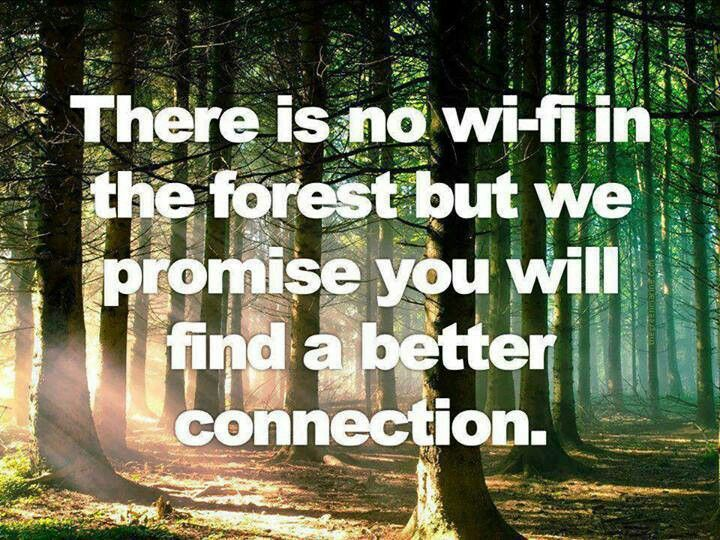 Inspirational Quotes About Forests. QuotesGram