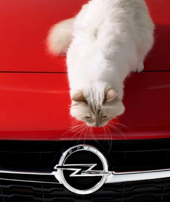 Lagerfeld & Choupette: Karls Katze posiert im Corsa