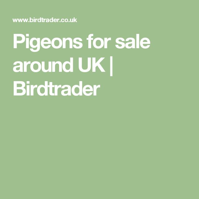 Pigeons for sale around UK | Birdtrader