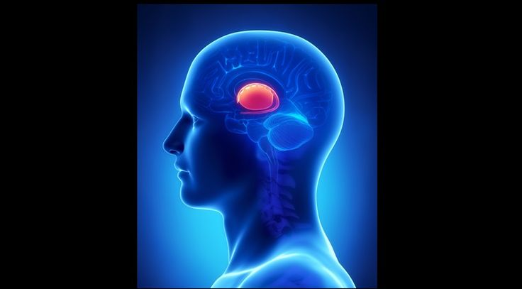 Brain  BASAL GANGLIA anatomy - cross section