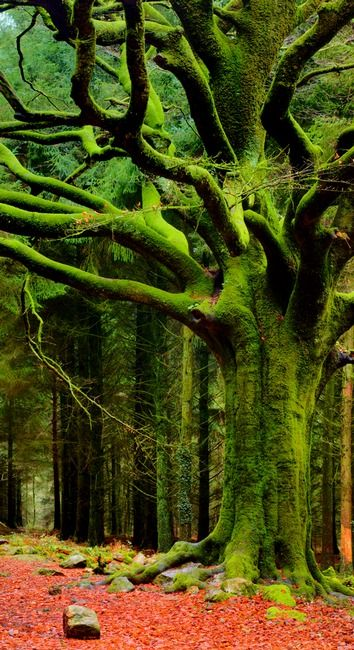 I love moss covered trees