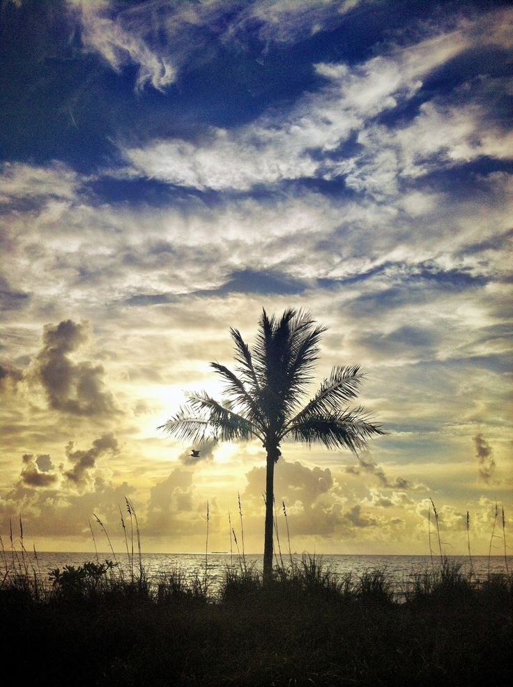 Dune palm under morning clouds.
