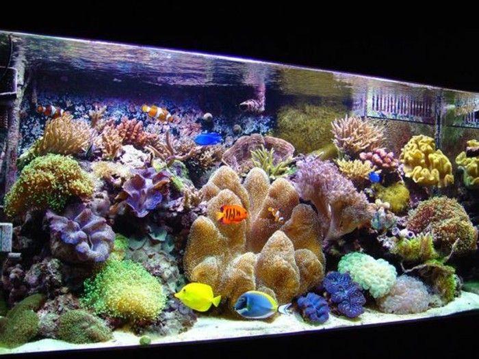 die besten 25 aquarium einrichten ideen auf pinterest betta aquarium aquarium aquascape und. Black Bedroom Furniture Sets. Home Design Ideas