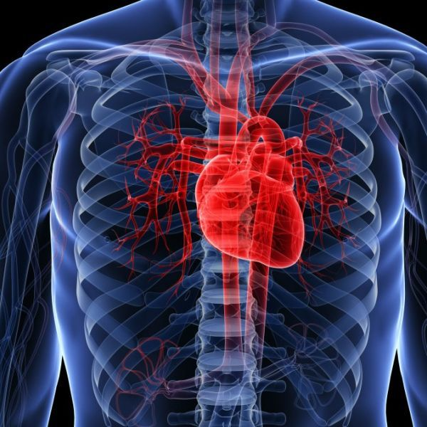 Researchers from Cornell University have created a heart out of porous plastic foam that can pump more fluid compared to existing models for artificial hearts