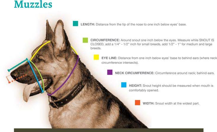 Muzzle Requirements -- Help prevent dog bite attacks.