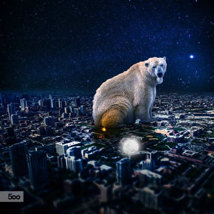 Bear and Little Moon by Lapanlima on 500px