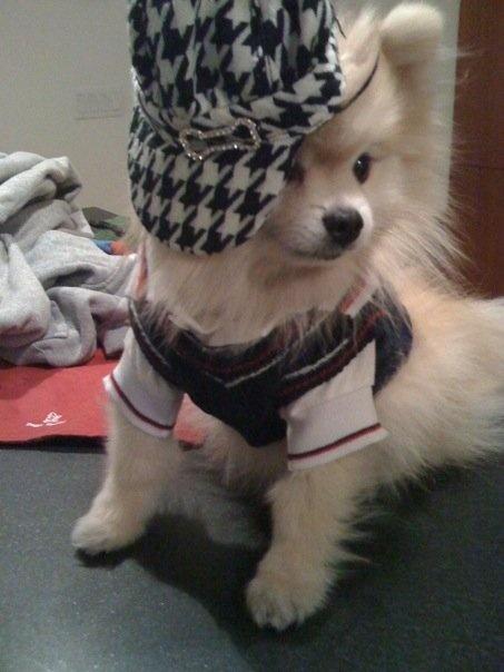 Tommy The Pomeranian