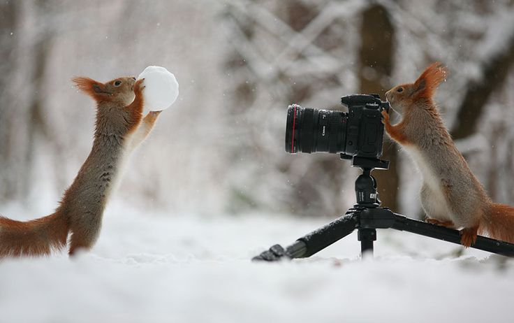 Talented Russian nature photographer Vadim Trunov has had close encounters with squirrels before, but this is the first time we've seen his photos of squirrels playing or shooting photos of each other! The photographer recently published some photos he's captured of squirrels that seem to be building snowmen or playing volleyball with nuts.