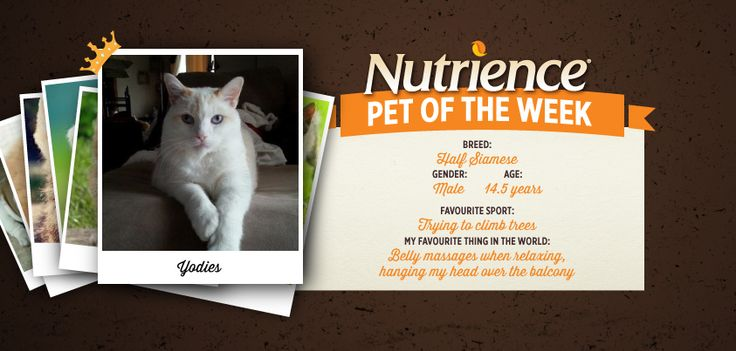 Yodies has purrrfected that pose! It's like he knew he would be #Nutrience Pet Of The Week! To submit your pet: http://bit.ly/PetOfWeek #Cute #Cat