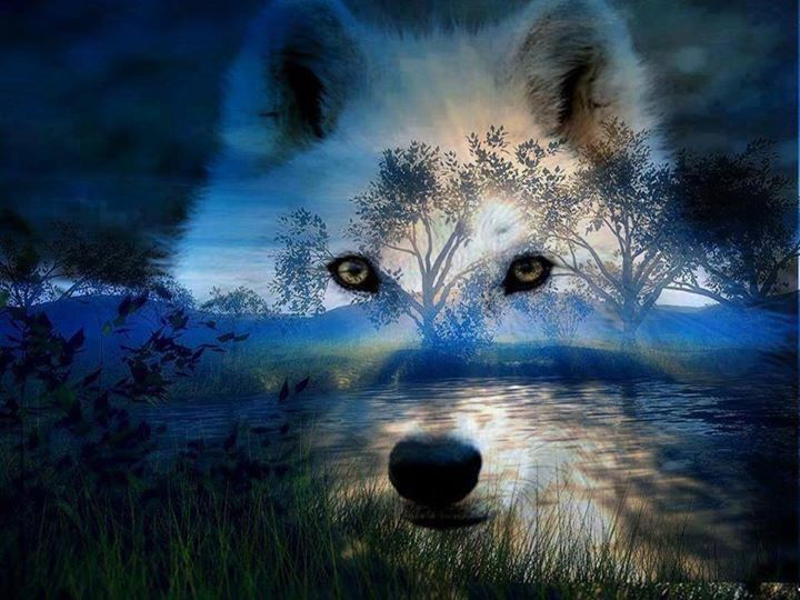 Farkas hajnal színeiben